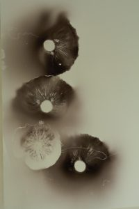 Image of mushroom spore print