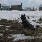 Dog looking through barbed wire onto snowy farm