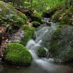 Waterfall in forest stream, surrounded by mossy rocks