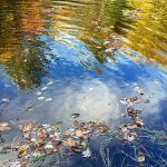 Dead leaves floating in water, with reflection of autumn trees in background