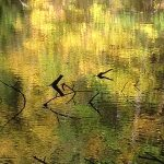 Reflection of fall colors in water with dead branches poking out