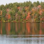Autumn trees and evergreen trees, and their reflection in the water
