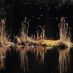 Reeds and their reflection in water