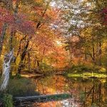 Pond in woods, surrounded by autumn trees