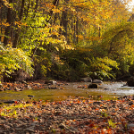 River in fall, with rocks in foreground and autumn trees in background