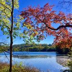 Two trees with red and yellow autumn leaves in foreground, lake in background, blue sky