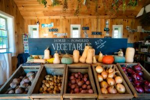 Attractive wooden bins full of various root vegetable in the foreground of a wooden structure, with winter squash piled above them. Dried herbs hang above and signs in background advertise other products (meat and grains).