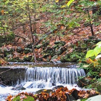 Nichols Brook at the Bradley Property in the fall
