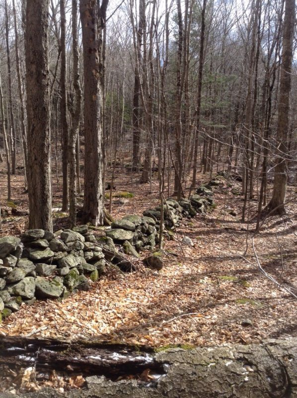 stonewall in woods