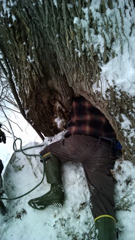 The bottom half of Andrew lying in snow, with the top half of him in a hold in a tree
