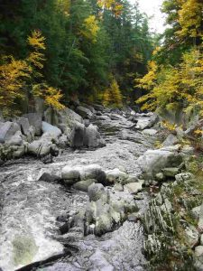 River and rocks, surrounded by trees