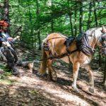 Horse Logging Demonstration - 10:30 am