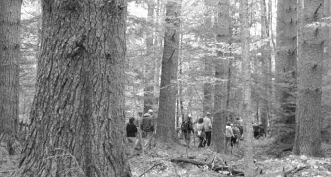 A group hikes the Bryant Homestead's Rivulet Trail, which encompasses several stages of forest growth.