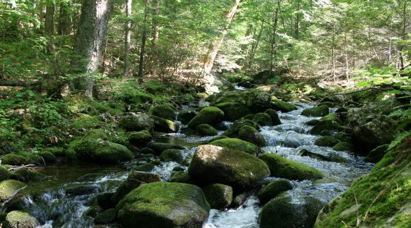 A brook in a forest, with many mossy rocks in the stream